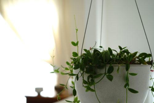 元気をくれる観賞植物