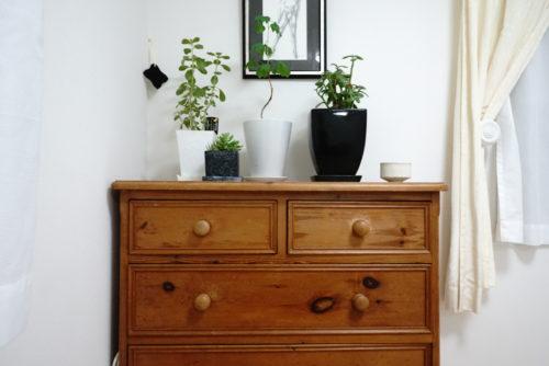 息子の部屋の観葉植物