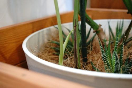 癒しのある観葉植物