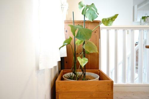 癒し効果のある観葉植物