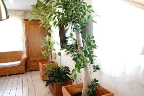 お部屋のインテリア観葉植物でシンメトリー